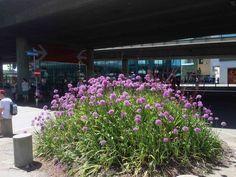 Blühende Wiese unter grauer Brücke Zurich, Plants, Grey, Flora, Plant