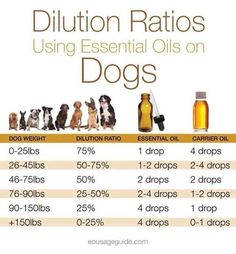 Dilution ratios for essential oils for dogs