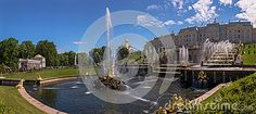 A wide - angle panoramic view of the famous touristic sightseeing point of the Samson fountain in Petergof in summer.