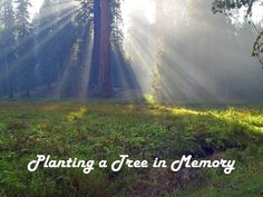 Memory Tree Sympathy Cards  Trees Planted In  by PlantTreesUS