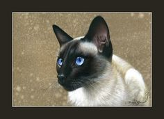 Siamese Cat Print In Blue Eyes by Irina Garmashova