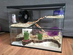 Diy Hamster House, Hamster Diy Cage, Hamster Life, Hedgehog Cage, Hedgehog Pet, Hamsters, Rodents, Hamster Habitat, Syrian Hamster