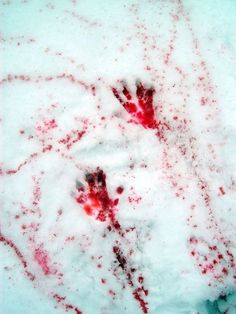 she left bloody prints in the snow, running for her sanity Jack Frost, Maleficarum, She Wolf, Sang, White Aesthetic, Mononoke, Red Riding Hood, Until Dawn, Dragon Age