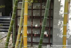 Bamboo in the Japanese garden | Real Japanese Gardens