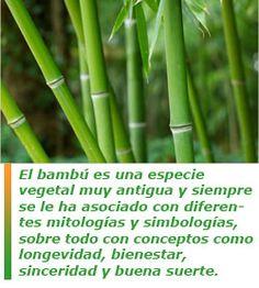 El masaje con cañas de bambú