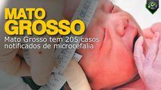 Até 23 de abril foram notificados 205 casos de microcefalia no estado, segundo as definições do Protocolo da Vigilância do Ministério da Saúde.