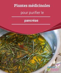 Plantes #médicinales pour purifier le pancréas   quelles #plantes utiliser et sous quelle forme pour #purifier le #pancréas.