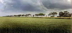 Groningen landschap 2 by poederbach, via Flickr