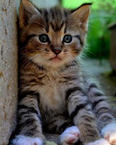 Cute Little Kittens, Baby Kittens, Kittens Cutest, Cats And Kittens, Cute Cats, Funny Cats, How To Cat, Here Kitty Kitty, Pretty Cats