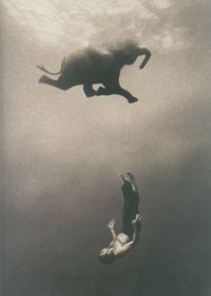 This is Gregory Colbert a photographer. These photos are unedited and real. He swims with these animals. Go to ashes and snow by Gregory Colbert and watch the video and check out how the photos were on display. White Photography, Animal Photography, Amazing Photography, Elephant Photography, Nature Photography, Creative Photography, Elephas Maximus, Elephant Love, Elephant Poster