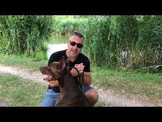 Gábor Nyakas The Dog Coach - YouTube