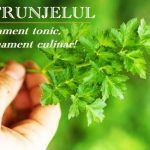 Clătite de Post cu Morcovi, Banană și Semințe de In - Rețetă | La Taifas Parsley, Herbs, Ornaments, Health, Alba, Food, Travel, Plant, Syrup