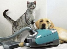 Pet-Friendly Cleaning Tips