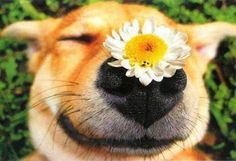 Take time to smell the flowers!