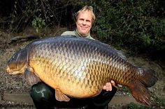 previous world record Common Carp