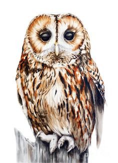 Tawny Owl watercolor illustration by artist Marie Burke Owl Watercolor, Watercolor Paintings, Owl Paintings, Watercolor Illustration, Painting Art, Owl Artwork, Tawny Owl, Owl Quilts, Beautiful Owl
