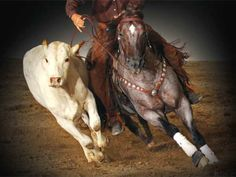 Got Cow Horse? reined cow horses for sale, cutting horses for sale ...