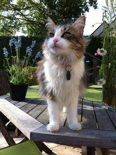chatte disparue à Chavagne
