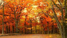 Iowa fall colors