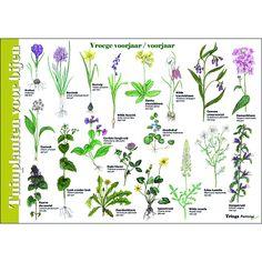Montessori, Homeschool Science Curriculum, Eco Garden, God's Heart, All Nature, Natural, Flora, National Parks, Plants