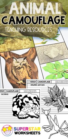 Print our free animal camouflage activities, worksheets, and teaching resources. Students learn about mimicry and camouflage with our free teaching worksheets. Animal Worksheets, Science Worksheets, Animal Activities, Worksheets For Kids, Activities For Kids, Learning Centers, Student Learning, Surviving In The Wild, Activity Mat