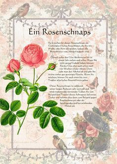 Ein Rosenschnaps - Another! Fall Drinks, Schnapps, Beauty Recipe, Green Life, Health And Beauty Tips, Medicinal Plants, Book Of Shadows, Homeopathy, Botanical Art