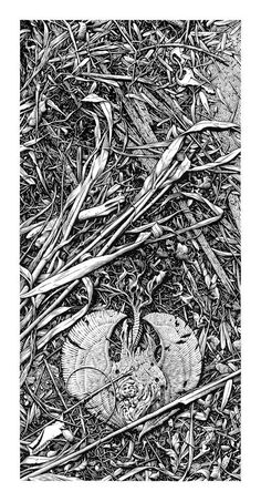 Five Reasons to Draw with Pen and Ink on Paper (and sometimes big) - Optimum Wound