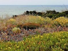 jardim com vista para o mar Vineyard, Water, Outdoor, Garden Pictures, Natural Landscaping, Fotografia, Vineyard Vines, The Great Outdoors, Aqua