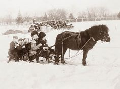 Pony and Sled