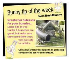 Bunny tip week 9 - Create fun hideouts for your bunnies Mini Lop Bunnies, Dwarf Bunnies, Cute Bunny, Rabbit Life, House Rabbit, Bunny Rabbit, Bunny Cages, Rabbit Cages, Baby Buns