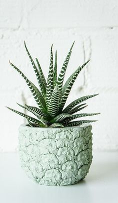 Hurrah — a planter for the pineapple obsessed ($50)! It makes even the simplest plants look like works of art. Plus, how cool is the mint shade? — AE