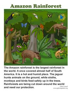 Learn about rainforests and other habitats with simple, fun activities on Exploringnature.org Rainforest Facts For Kids, Amazon Rainforest Trees, Rainforest Butterfly, Rainforest Project, Rainforest Activities, Rainforest Habitat, Rainforest Theme, Rainforest Animals, Rainforest Crafts