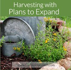 Beginner Gardeners tips, Harvesting with plans to expand