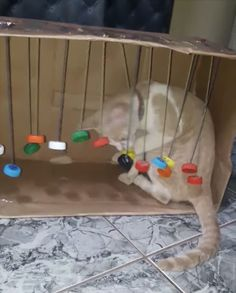 Homemade Cat Toys, Diy Dog Toys, Diy Cat Enclosure, Cat Run, Cat Hacks, Kitten Toys, Cat Playground, Kitten Care, Matou
