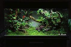 This is one of the most stuning ideas ever for a frog vivarium. Giving open floor space and open space branches. as well as packed vegetation on both the floor and branches. Vivarium, Paludarium, Aquascaping, Frog Terrarium, Crested Gecko, Moss Garden, Tropical, Reptile Enclosure, Tree Frogs