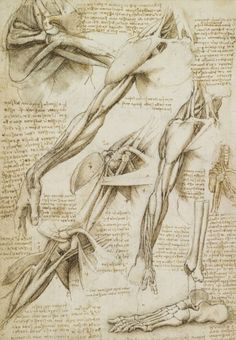 We can learn a great deal from analyzing Leonardo da Vinci drawings. Here are five lessons from this Renaissance master. Anatomy Sketches, Body Sketches, Anatomy Drawing, Anatomy Art, Drawing Sketches, Human Anatomy, Arte Com Grey's Anatomy, Walker Art, Colossal Art