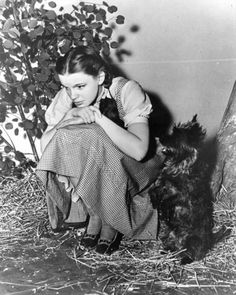 Judy Garland and Toto on the set of The Wizard Of Oz 1939