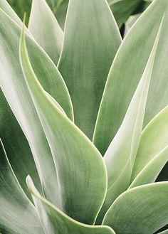 24 ideas succulent photography plants flower for 2019 Cool Plants, Green Plants, Green Cactus, Cactus Cactus, Nature Plants, Cactus Flower, Terra Verde, Plant Texture, Green Texture