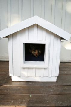 DIY: The Cat Cabin....for Woody Woodstock