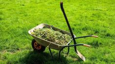 Weeds are the single most frustrating part of gardening. They encroach upon your garden and they cut off nutrition to your vegetables. Most people agree — weeds must go! But the solution is not dangerous weed killing chemicals. How To Kill Grass, Weed Plants, Lush Lawn, Seed Germination, Weed Seeds, Thing 1, Top Soil, Grass Seed, Weed Control