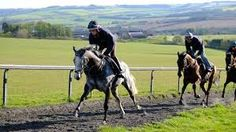 Image result for godley stud farm hyde images Stud Farm, Hyde, Bristol, Horses, Animals, Image, Animales, Animaux, Horse