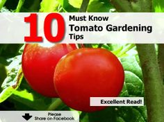 10 Must Know Tomato Gardening Tips