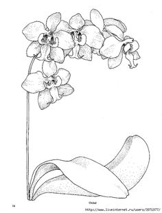 Orchid Line Drawing, Orchid Template, 532 699, Orchid Embroidery, Ketel, 699…