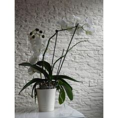 Plants, Metr, Gypsum, Plant, Planting, Planets