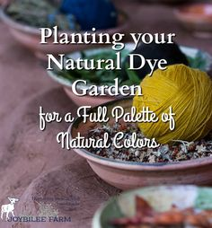 A natural dye garden will give you eco-friendly, natural dye pigments for textiles, knitting yarns, soap making, and more. Plan to add one to your backyard. Natural Dye Fabric, Natural Dyeing, Shibori, Textile Dyeing, Dyeing Fabric, Earth Pigments, Gardening For Beginners, How To Dye Fabric, Textiles
