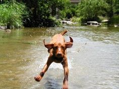 The Flying Nun! Vizslas are very playful and love running around in the great outdoors. They work best with active owners.