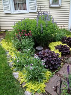 Baptisia (false indigo) in full bloom along with Centranthus Ruber (red valerian). May 2013 Florida Gardening, Texas Gardening, Flower Gardening, Landscaping Ideas, Garden Landscaping, Outdoor Crafts, Outdoor Decor, Garden Theme, Garden Care