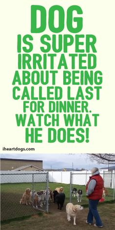 Dog Is Super Irritated About Being Called Last For Dinner. Watch What He Does! :)