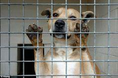 """""""O Grito do Bicho"""": Cresce o número de cães eutanasiados no Reino Unid..."""