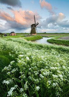 All Dutch - Windmill, dike, farm, water, sky.....looks pretty Dutch to me....:)